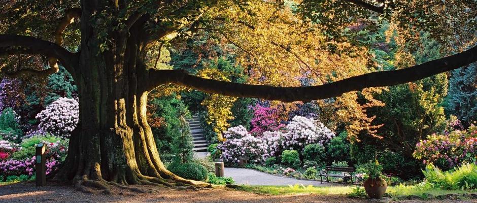 Arboretum W Wojsławicach Strona Oficjalna