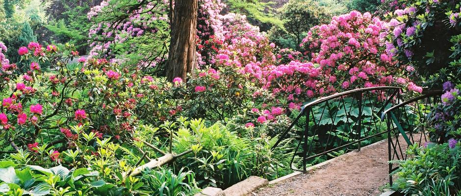 Slider różaneczniki