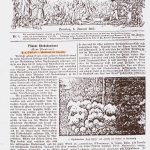 Artykuł F. Oheimba,  1907 r.