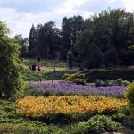 Bujne kwitnienie kosaćów (Iris) i wczesnych liliowców (Hemerocallis) w maju - HGN