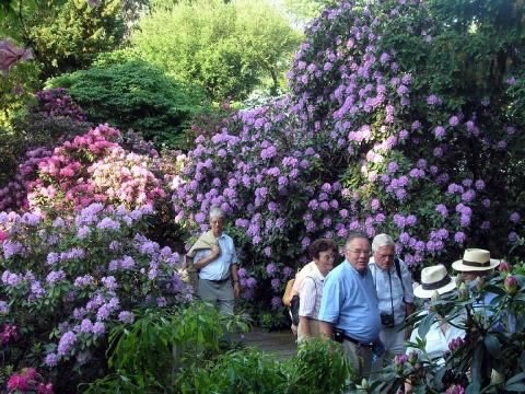 Od 24 maja do 1 czerwca w Arboretum trwa Wystawa Roślin Wrzosowatych