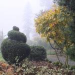 Formowane bukszpany (Buxus) - HGN