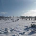 Sad zimową porą - HGN