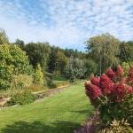 Hortensja bukietowa (Hydrangea paniculata) 'Pinky Winky' - Arboretum  Wojsławice