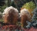 Festiwla Traw i Kwiatów Jesieni