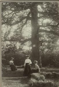 Wojsławice 1903 r. - odpoczynek gości pod dębem.
