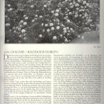 art. Oheimb, RHODODENDRON, cz.I -1924 r