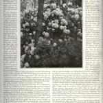 art. Oheimb, RHODODENDRON, cz.II -1924 r
