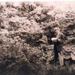 dr Tadeusz Szymanowski  w trakcie inwentaryzacji drzew, ok. 1950 r.