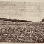 1. Szkółka bylin Oheimbów - Woislowitz, 1927 r.