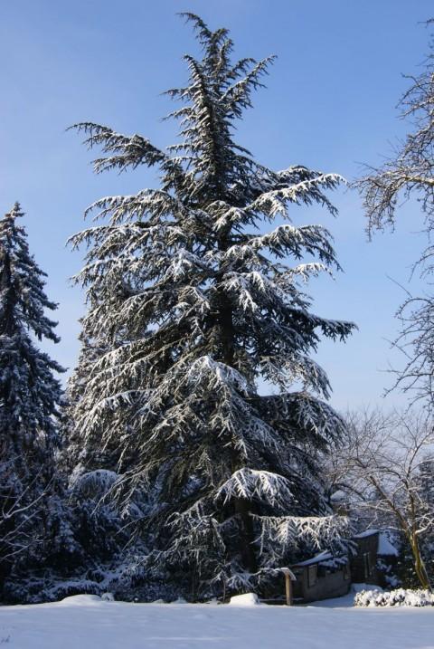 Zima w Arboretum w Wojsławicach 2014 r.