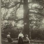 Odpoczynek pod dębem - Wojsławice 1903 r., archiw. OB