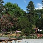 Widok na nieistniejacy pałac - Arboretum w Wojsławicach 2012