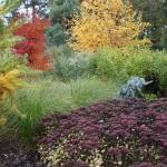 Jesienne barwy w Arboretum w Wojsławicach, HGN (3)