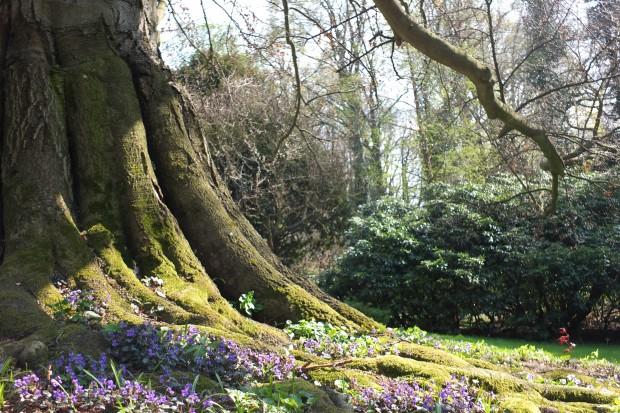 Wiosna 2014 w Arboretum w Wojsławicach
