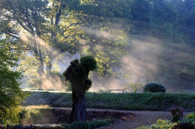 Poranki w wojsławickim Arboretum