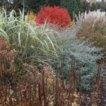 Jesienne-barwy-w-Arboretum-w-Wojsławicach-HGN-2