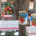 Owoce poziomkowca (Arbutus unedo)