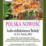 azalia (Rhododendron) 'Beskidy'
