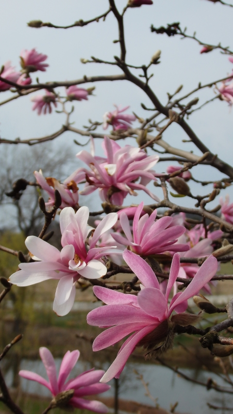 Wiosna w wojsławickim Arboretum – 11.04.2015