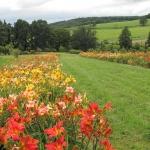 Arboretum Wojslawice (Polen) - Kolekcja Narodowa Liliowców i Display Garden AHS (4)