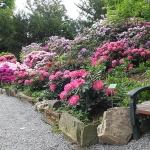 Bujne, majowe kwitnienie różaneczników i azalii w trakcie HEMEOmania 2015-  Arboretum w Wojsławicach_HGN (5)