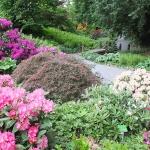 Bujne, majowe kwitnienie różaneczników i azalii w trakcie HEMEOmania 2015-  Arboretum w Wojsławicach_HGN (7)