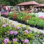 Kiermasz różaneczników i książek ogrodniczych - RODOmania 2015_HGN (2)