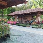 Kiermasz różaneczników i książek ogrodniczych - RODOmania 2015_HGN (3)