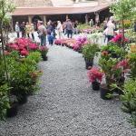 Kiermasz różaneczników i książek ogrodniczych - RODOmania 2015_HGN (5)