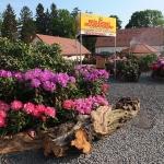 Ogrody pokazowe - RODOmania 2015 - Arboretum w Woksławicach_HGN (5)