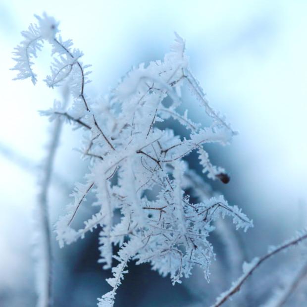 Zima w wojsławickim Arboretum – 14.02.2017