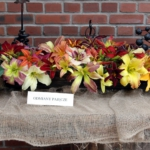 IX spotkanie liliowcowych entuzjastów 12–13 lipca 2014 - fot. HGN 1