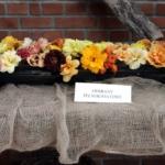 IX spotkanie liliowcowych entuzjastów 12–13 lipca 2014 - fot. TN1