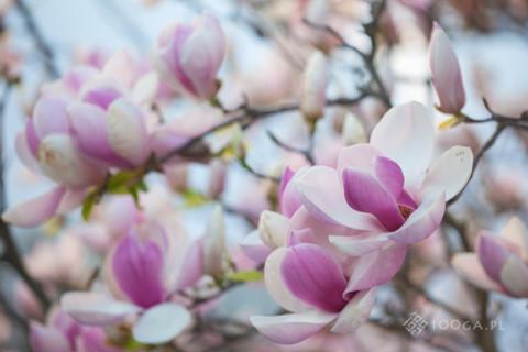 Kwiecień w wojsławickim Arboretum