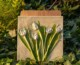 """18.08.2019 r. – 27.10.2019 r.  wystawa """"Ślady natury – roślinne reliefy"""""""