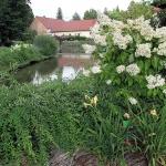 Forma pienna hortensji bukietowej (H. paniculata) 'Grandiflora' - HGN