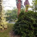 Hortensja pnąca (H. anomala subsp. petiolaris) jesienią - HGN