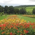 Kolekcja Narodowa liliowców (Hemerocallis) - HGN