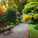 Największy okaz bukszpanu zwyczajnego (Buxus sempervirens) w Arboretum w Wojsławicach - HGN