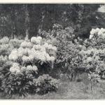 Wojsławice w maju, Gartenschönheit 1920 r.