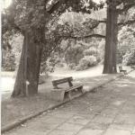 1 - Promenada między stawami, 1989 r., archiw. OB