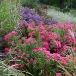 Jesienne barwy w Arboretum w Wojsławicach, HGN (1)