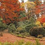 Jesienne barwy w Arboretum w Wojsławicach, HGN