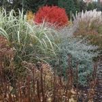 Jesienne barwy w Arboretum w Wojsławicach, HGN (2)