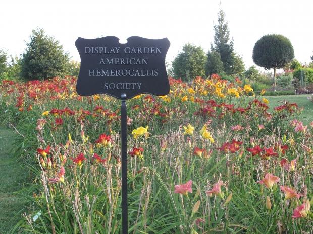 Arboretum w Wojsławicach – Oficjalny Ogród Pokazowy Amerykańskiego Towarzystwa Liliowcowego (American Hemerocallis Society) 2013 r.